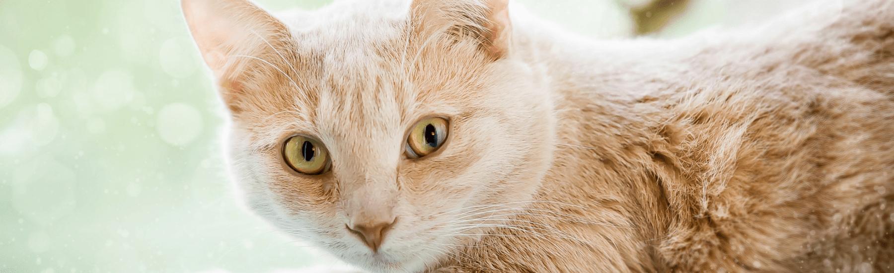 Cat Deworming