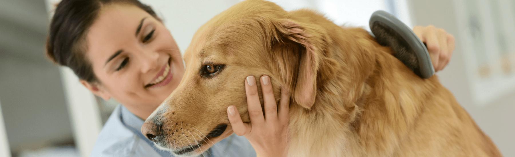 dog_grooming