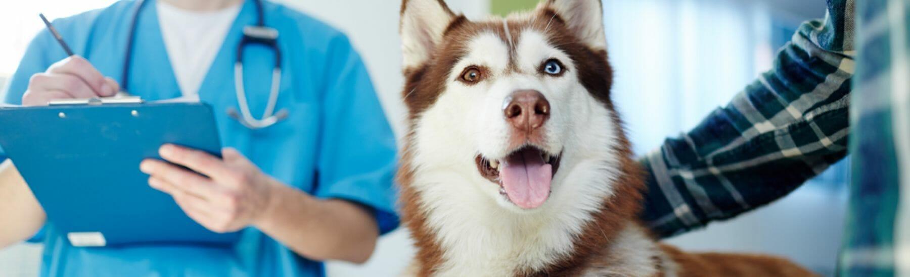 Referral Forms | McKnight 24 Hour Veterinary Hospital